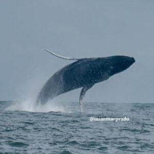 avistamiento-de-ballenas